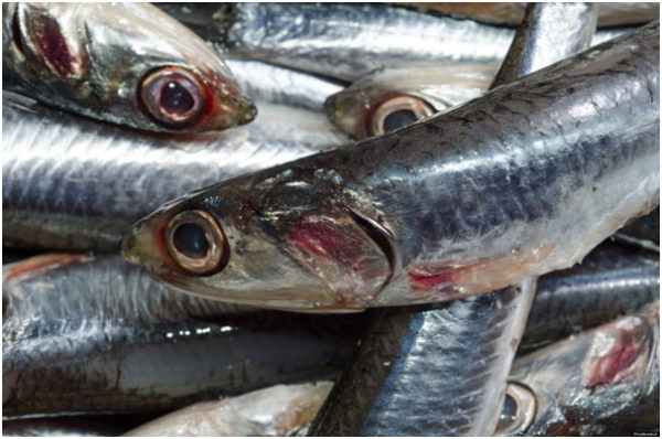 Breast Feeding Mother Should Avoid Fish High In Mercury