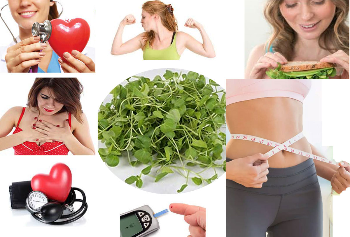 How Consuming Watercress Is Beneficial For Health