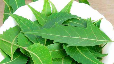 neem leaves remedy for hair care
