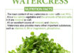 Watercress Calories and Nutrition Facts