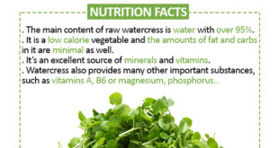 Secrets of Delicious Watercress Plant