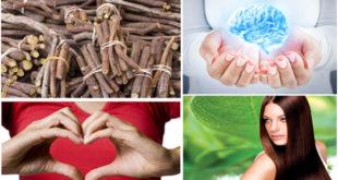 Amazing Health Benefits Of Licorice