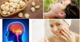 Benefits Of Kukui Nut That You Should Know